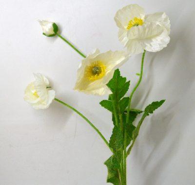0344_Poppy White