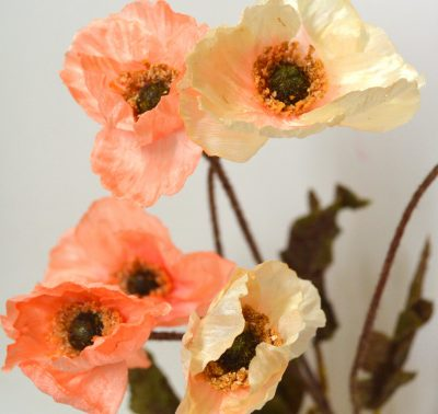 0355 Poppy Peach & Cream 3