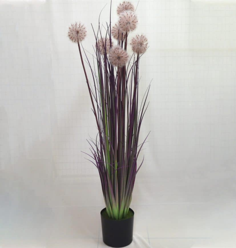 Potted Purplish Dandelion Flower Rental for Decorations KL