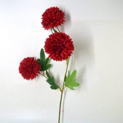 Dahlia Red flower rental KL